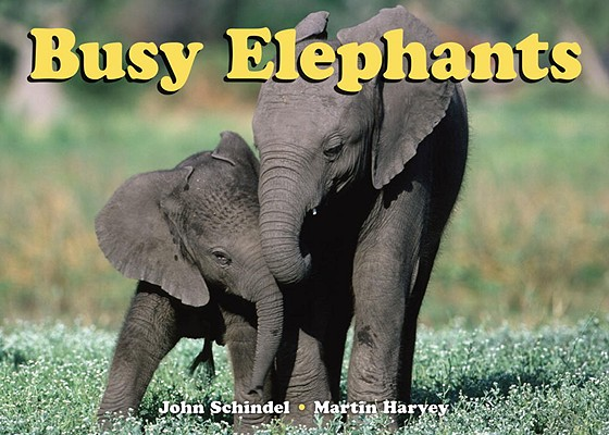 Busy Elephants By Schindel, John/ Harvey, Martin (PHT)